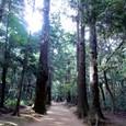 鹿島神宮の森。
